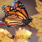 Natural & Frugal: Raising 6 kids