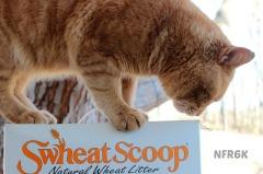 swheat scoop 3
