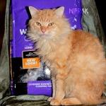 Worlds best cat litter 1