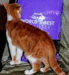 Worlds best cat litter 2