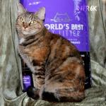 Worlds best cat litter 6
