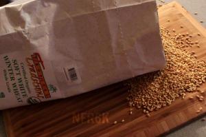 winter wheat 2