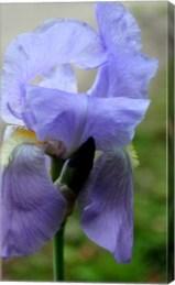 canvas flower