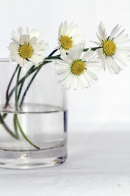 daisys-in-glass