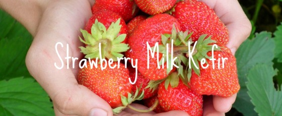 Strawberry Milk Kefir